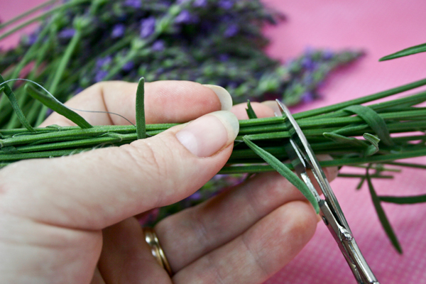 cut the bottom of the stems to make them even
