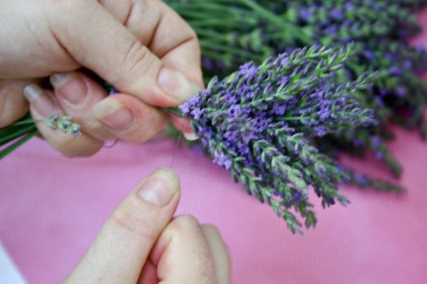 secure the lavender stems with strong thread